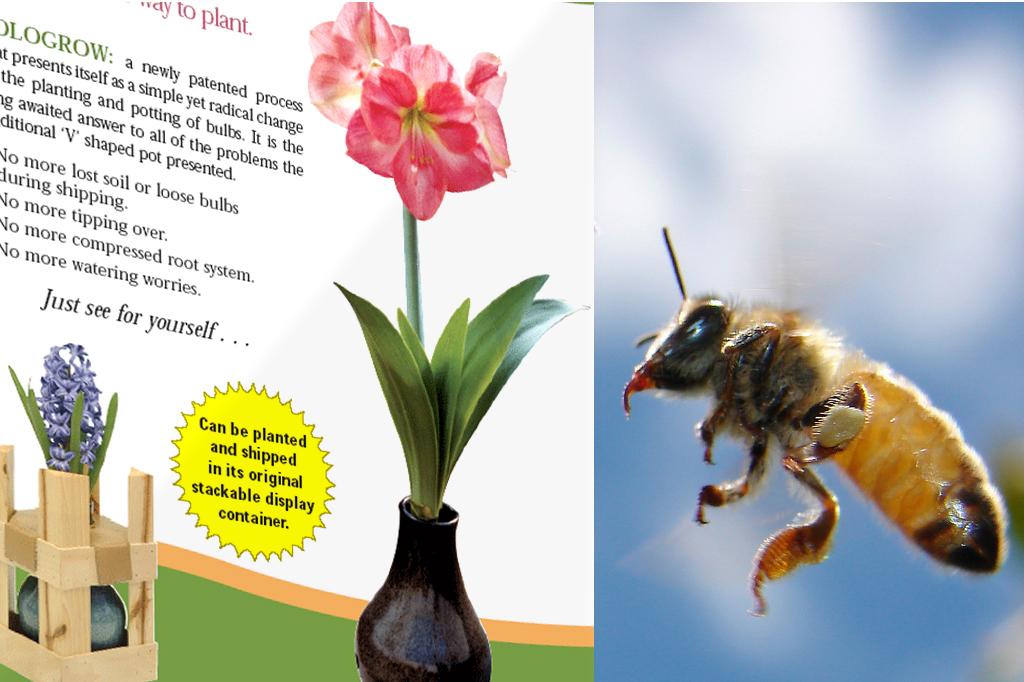 Print_buzz