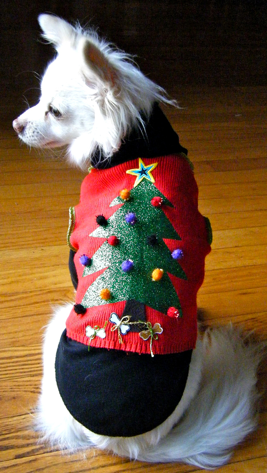 doggy holiday sweater