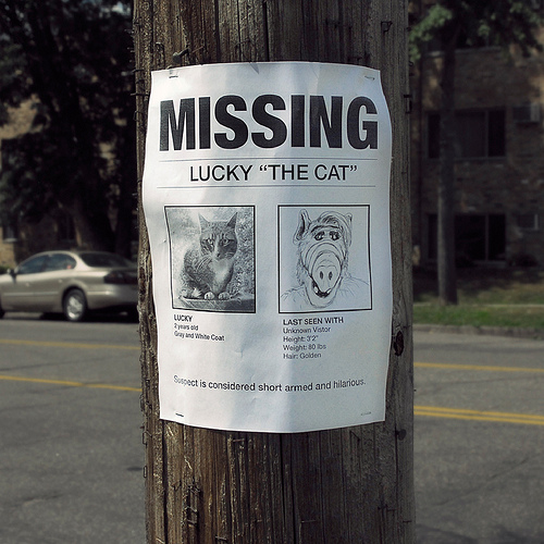 Funny Lost and Found Pet Flyer
