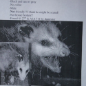 funny lost pet flyer