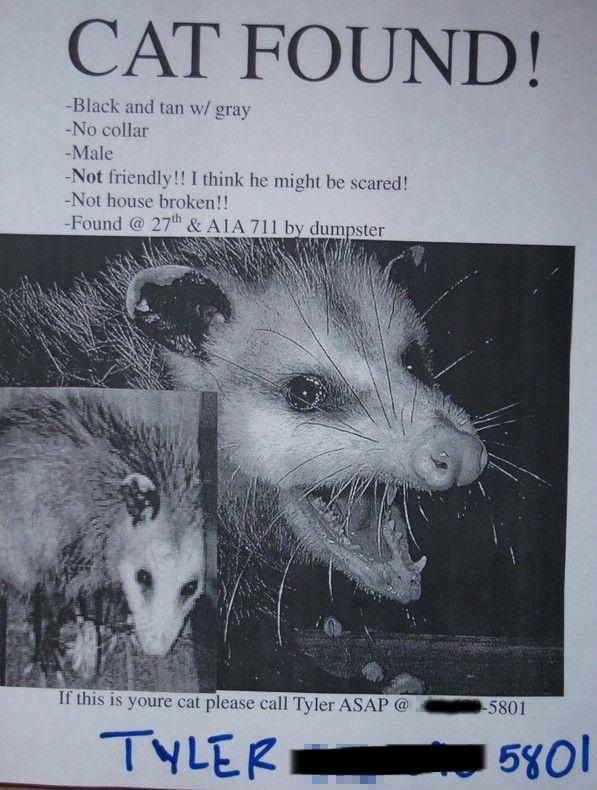 missing animal flyer
