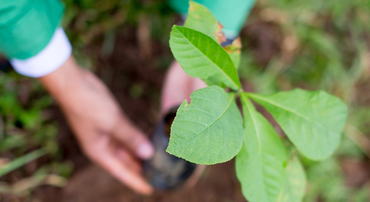 corporate social responsibility tree planting