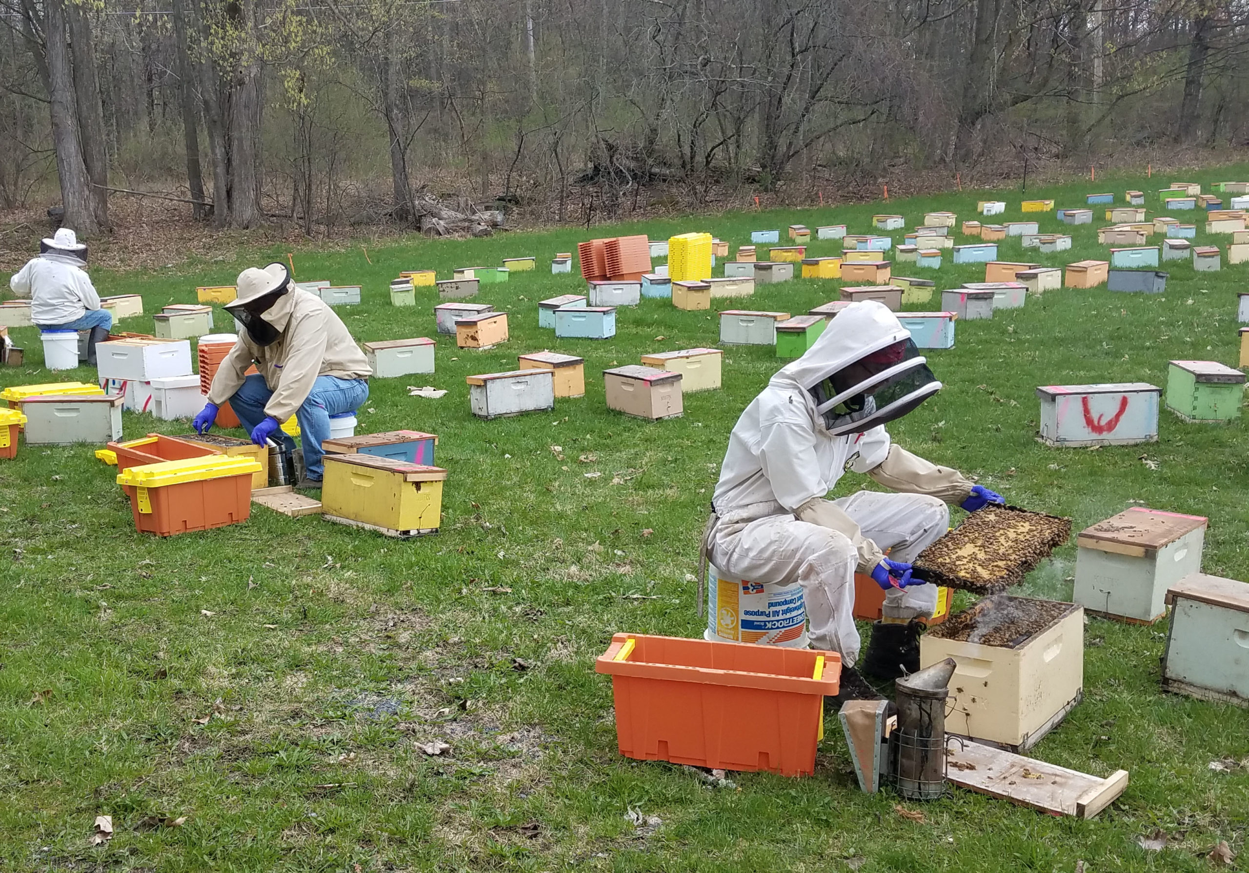 Transferring bees into nuc boxes